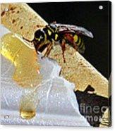 A Taste Of Honey Acrylic Print