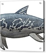 A Temnodontosaurus Burgundiae Acrylic Print