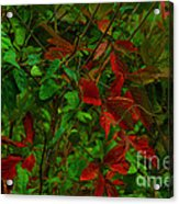 A Touch Of Christmas In Nature Acrylic Print
