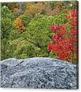A Touch Of Fall Acrylic Print
