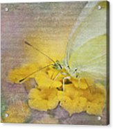 A Touch Of Yellow Acrylic Print by Betty LaRue