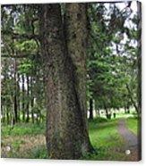 A Tree Divided Acrylic Print