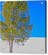 A Trees Shadow Acrylic Print