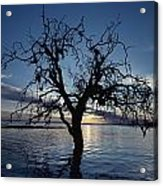 A View At Dawn Of A Silhouetted Tree Acrylic Print