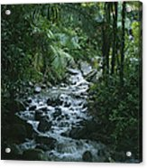 A View Of A Tropical Stream In El Acrylic Print