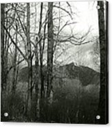 A View Through The Trees Bw Acrylic Print