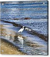 A Visit To The Beach Acrylic Print