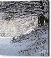 A Walk In The Snow Acrylic Print