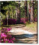 A Walk In The Springtime Woods Acrylic Print