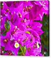 A Wall Of Flowers Acrylic Print