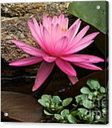 A Waterlily's Grace Acrylic Print