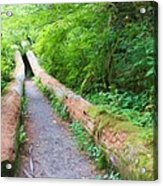 A Well Marked Path Acrylic Print