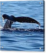 A Whale Of A Time Acrylic Print