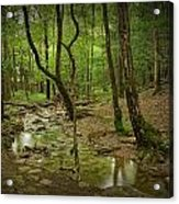 A Woodland Stream In Cades Cove No.472 Acrylic Print