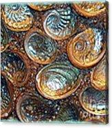 Abalones Acrylic Print by Judi Bagwell