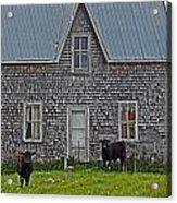 Abandoned Cow House - Barrow Bay Acrylic Print