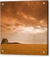 Abandoned Farm In Durum Wheat Field Acrylic Print