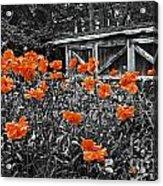 Abandoned Shed Acrylic Print