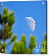 Above The Pines Acrylic Print