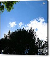 Above The Trees Acrylic Print