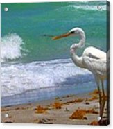 Absorbed In Long Boat Key Acrylic Print