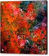 Abstract 269 Acrylic Print