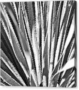 Abstract Cactus Acrylic Print