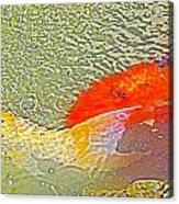 Abstract Coy Acrylic Print