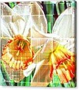 Abstract Daffodils  Acrylic Print