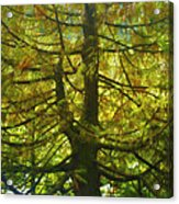 Abstract Foliage Acrylic Print