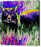 Abstract Of Tabby Acrylic Print