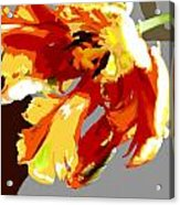 Abstract Parrot Tulip Acrylic Print