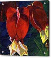 Abutilon Acrylic Print
