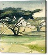 Acacia Acrylic Print