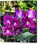 Accented Purple Orchid  Acrylic Print