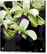 Accented Purple Poster Orchid Fx  Acrylic Print