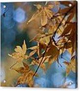Acer Autumn Acrylic Print