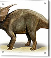 Achelousaurus Horneri, A Prehistoric Acrylic Print