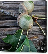 Acorns And Oak Leaves Acrylic Print
