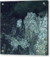 Active Hydrothermal Vent Acrylic Print