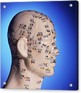 Acupuncture Chart On A Cast Of A Head And Neck Acrylic Print
