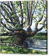 Adamson Home Tree Acrylic Print