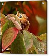 Adorable Chipmunk Hiding In Autumn Leaves Acrylic Print