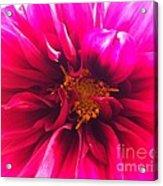 Adorable Flora  Acrylic Print