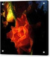 Adoring Light Acrylic Print
