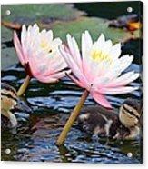 Afloat Among Lillies Acrylic Print