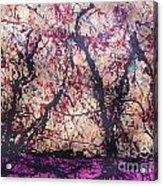 Afri-spiritus Sembler Acrylic Print