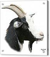 African Goat Acrylic Print