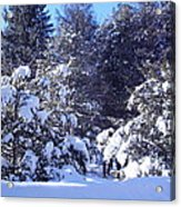 After A New England Snowstorm Acrylic Print