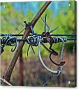 After The Harvest Acrylic Print